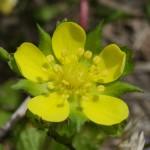 4月下旬の庭を彩る花 -春の花シリーズ4-
