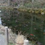 「睡蓮」の絵のようなモネの池