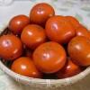 柿の収穫 11月29日 今日この頃