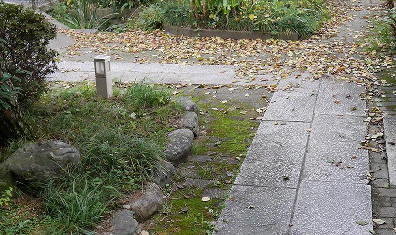 庭の落ち葉2