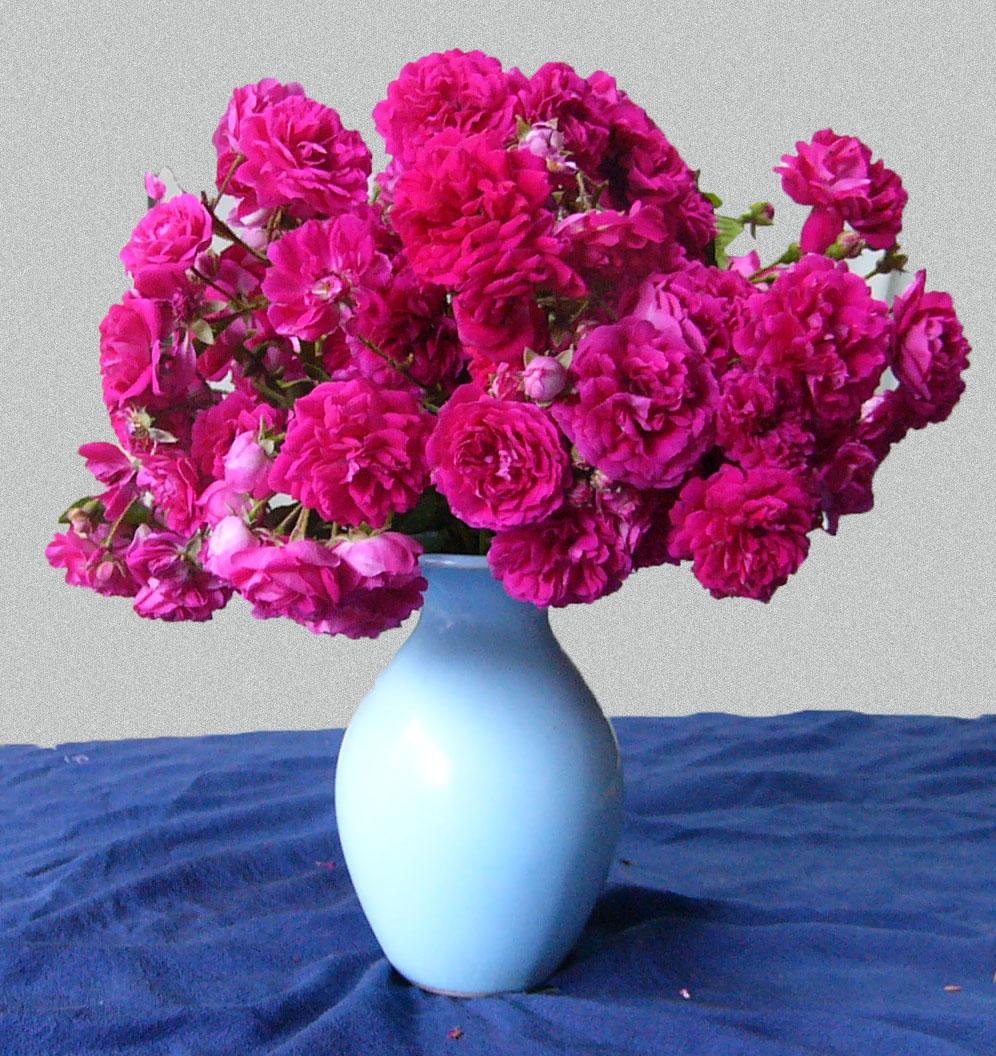 花瓶のバラ