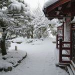 数年に一度の強い寒波 1月15日今日この頃