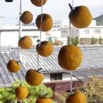 干し柿を作る