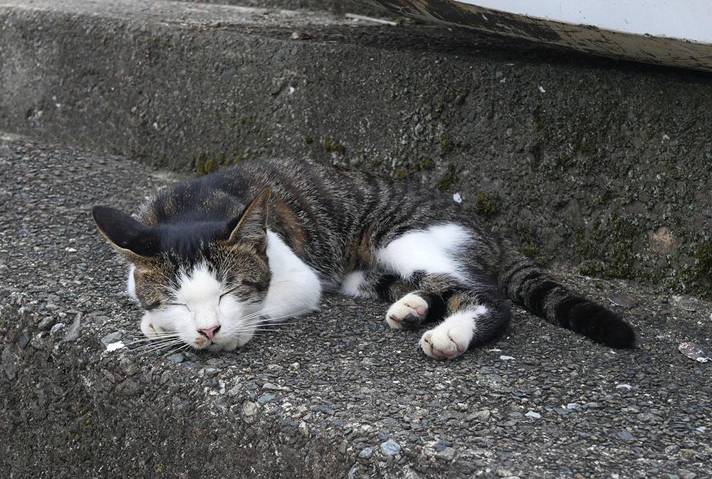 気持ちよさそうに居眠りする猫