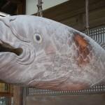 巨大木魚 9月10日今日この頃