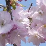 春爛漫 4月4日今日この頃
