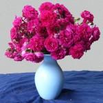 バラの花 6月3日今日この頃