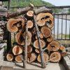 庭のヒノキを伐採 4月29日今日この頃