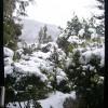 雪景色 1月19日今日この頃