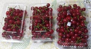さくらんぼ2011収穫