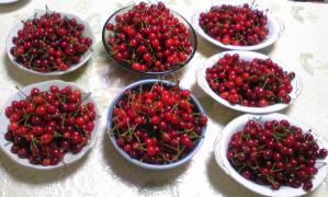 さくらんぼ2010収穫