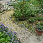 キソケイの花びら散る小径