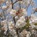 早春の庭の花 -春の花シリーズ1-