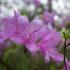 春の里山で見つけた花 -春の花シリーズ3-
