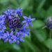 5月上旬の庭を彩る花 -春の花シリーズ5-